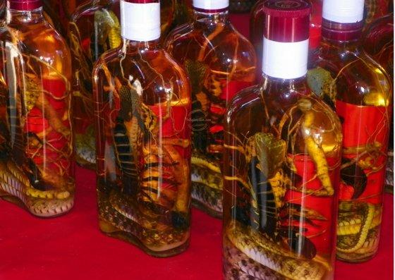 Scorpions and snakes inside the snake wine bottles
