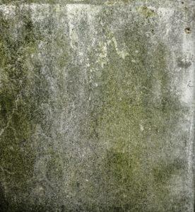 Molds , Indoor Pollution