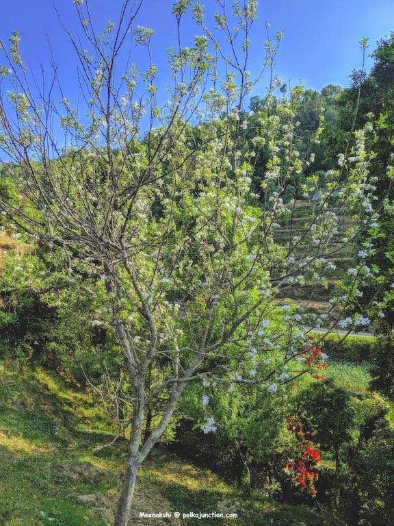 Parvada-Bungalows-apple-blooms