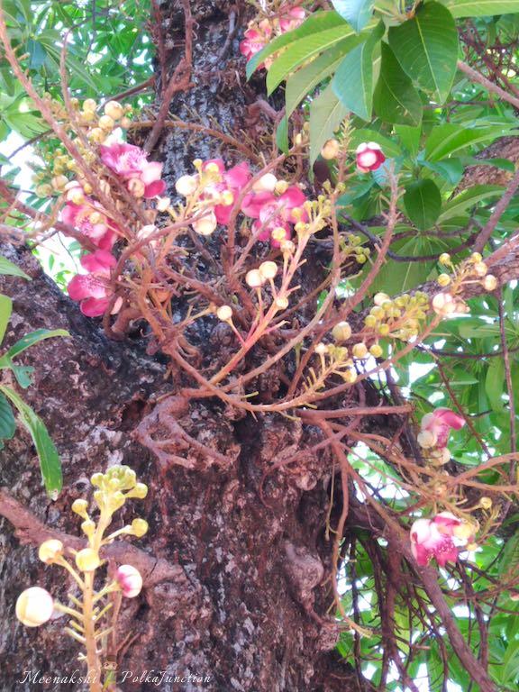 pillayarpatti-nagalingam-flower